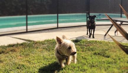 Pet Safety Fence