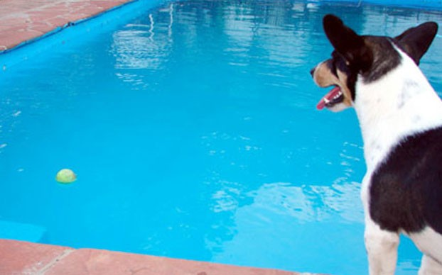Pool Safety Dog